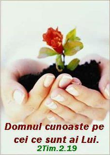 182529_114542832021595_758705264_n