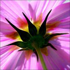 Garden flowersJuly, 2010