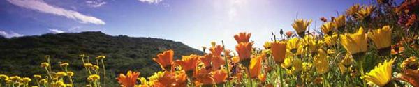 dop_summer_day14_125