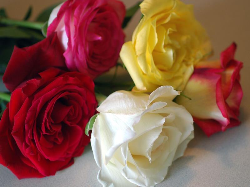 артистки пролил фото цветы для машеньки фото ниже, можно