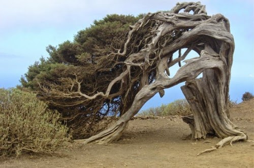 2012_interesting_tree-500x332
