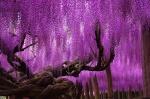 150555-amazing-trees-1-2-880-512649c2f0-1484634234