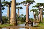 150605-amazing-trees-11-880-236c429764-1484634234