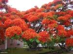 150705-amazing-trees-15-880-67c70542a7-1484634234