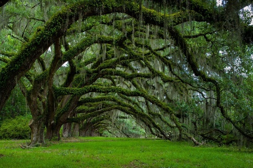 150755-amazing-trees-17-880-4b9501a9a9-1484634234