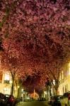 150955-amazing-trees-2-880-80028255c4-1484634234