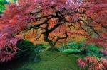 151055-amazing-trees-21-880-9c7e41aa17-1484634234