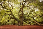 151105-amazing-trees-22-880-61b5d600cb-1484634234